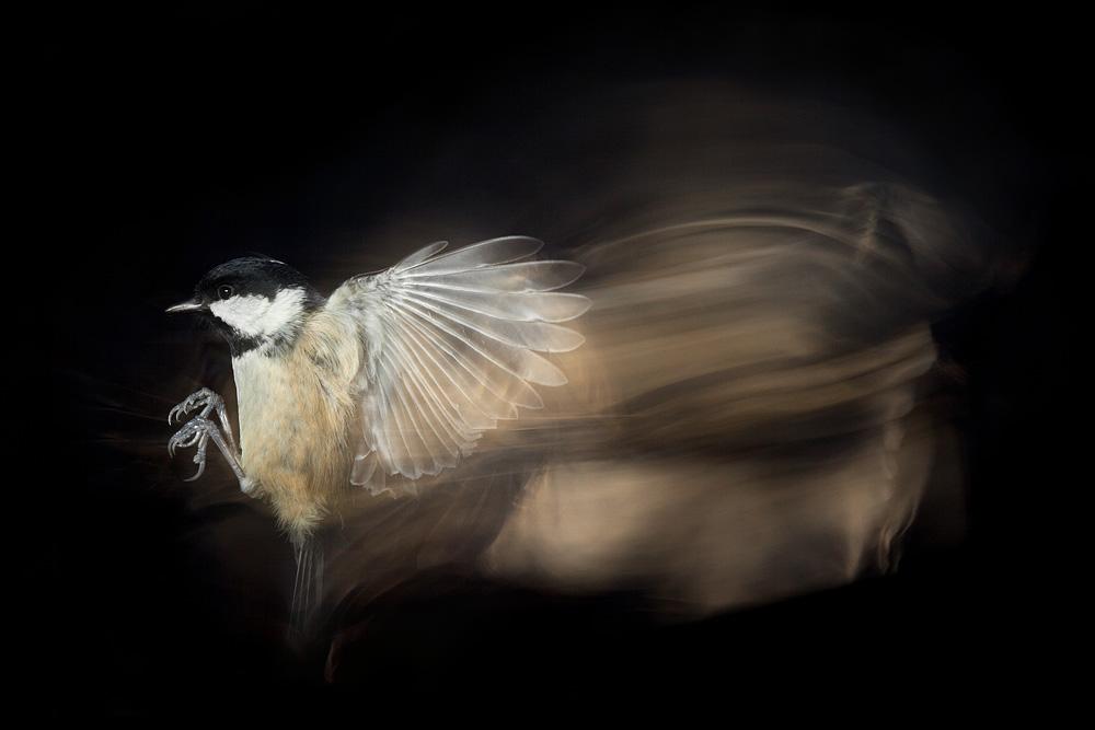 bird_trail_coaltit.jpg