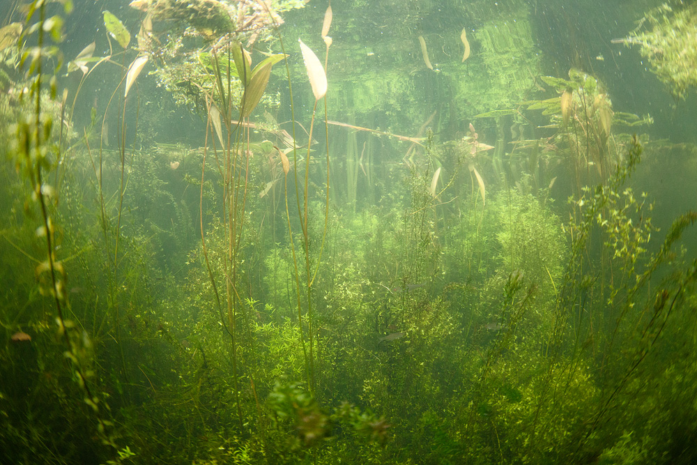 An underwater landscape, showing the crystal clear water in the Tiverton Canal