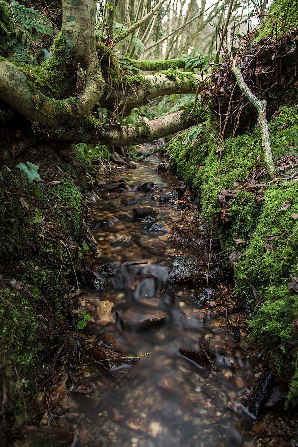 A small stream in the Blackdownhills from which I collected the samples seen on this page.