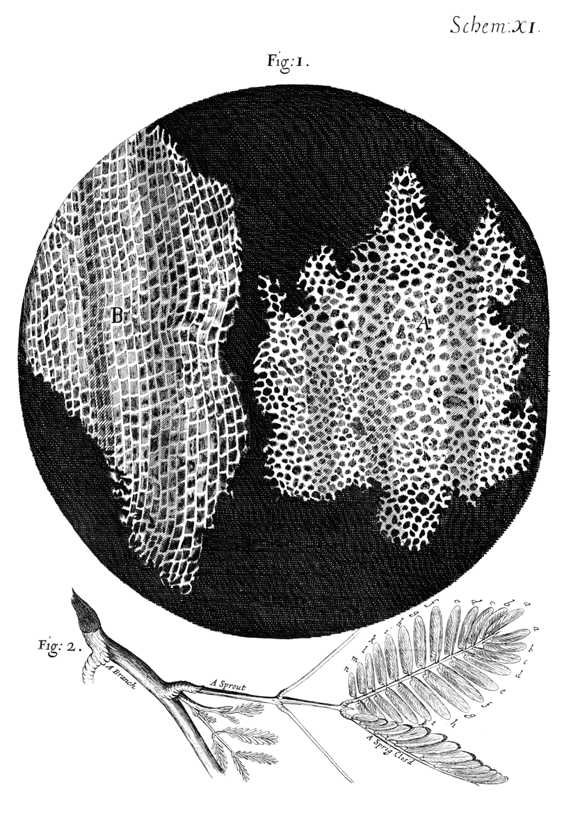 "Figure 2: Drawings by Robert Hooke of cork (top) as observed through a light microscope. Hooke termed the compartments he observed ""cells"", which is used to this day to describe the smallest unit of life capable of self-replication. From Micrographia."