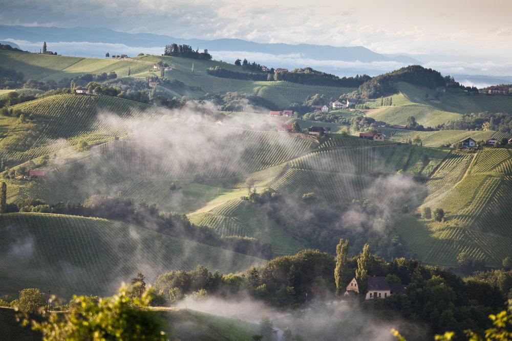 Hillside vineyards in Leutschach, one of the leading wine villages in southern Styria © AWMB / Anna Stöcher