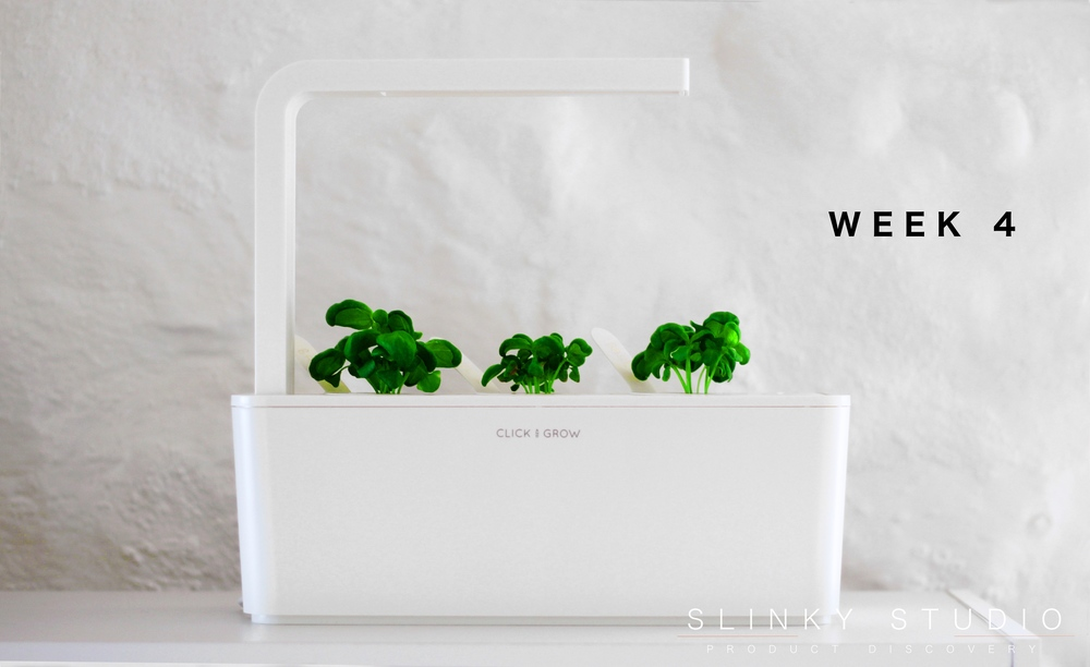 Click & Grow Smart Garden Basil Week 4 Growth