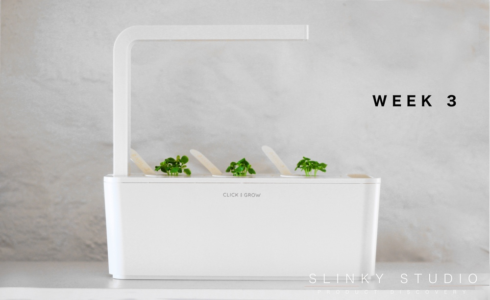 Click & Grow Smart Garden Basil Week 3 Growth