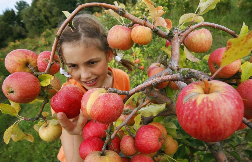 girl-apple-picking.jpg