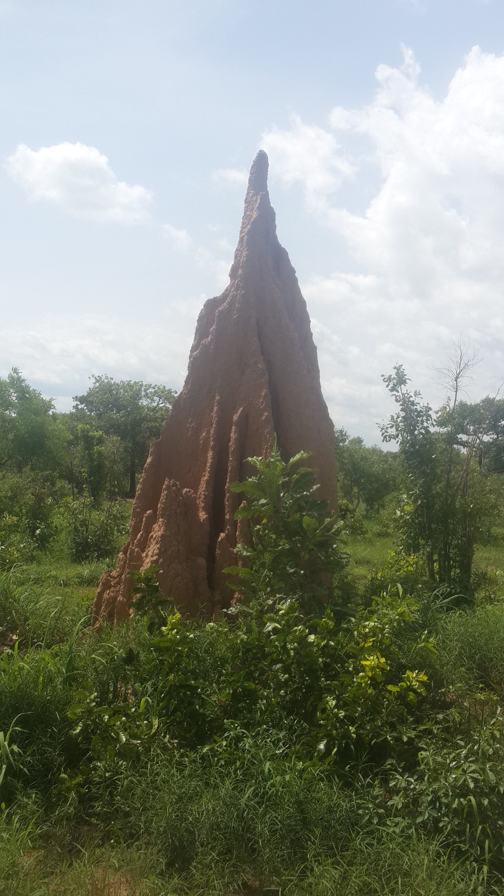 ant mound.jpg