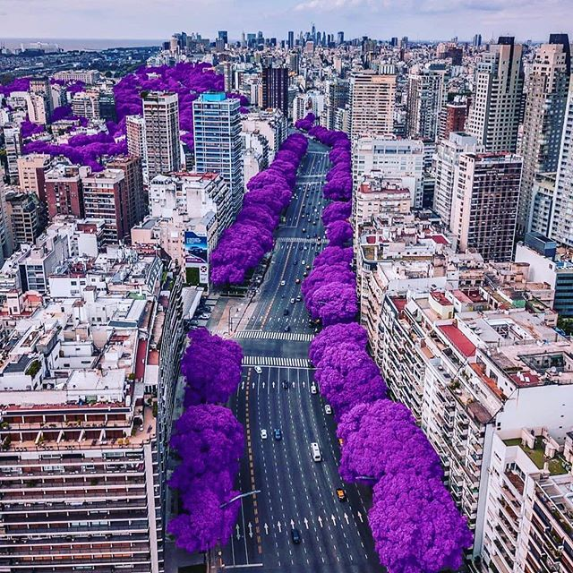 "Purple Bliss""💜🌳 Do you know what city this is?🌃 Follow @roam for more!⠀ ⠀ Tag someone that should see this!👇 📸 by @alepetra_ #natures"""