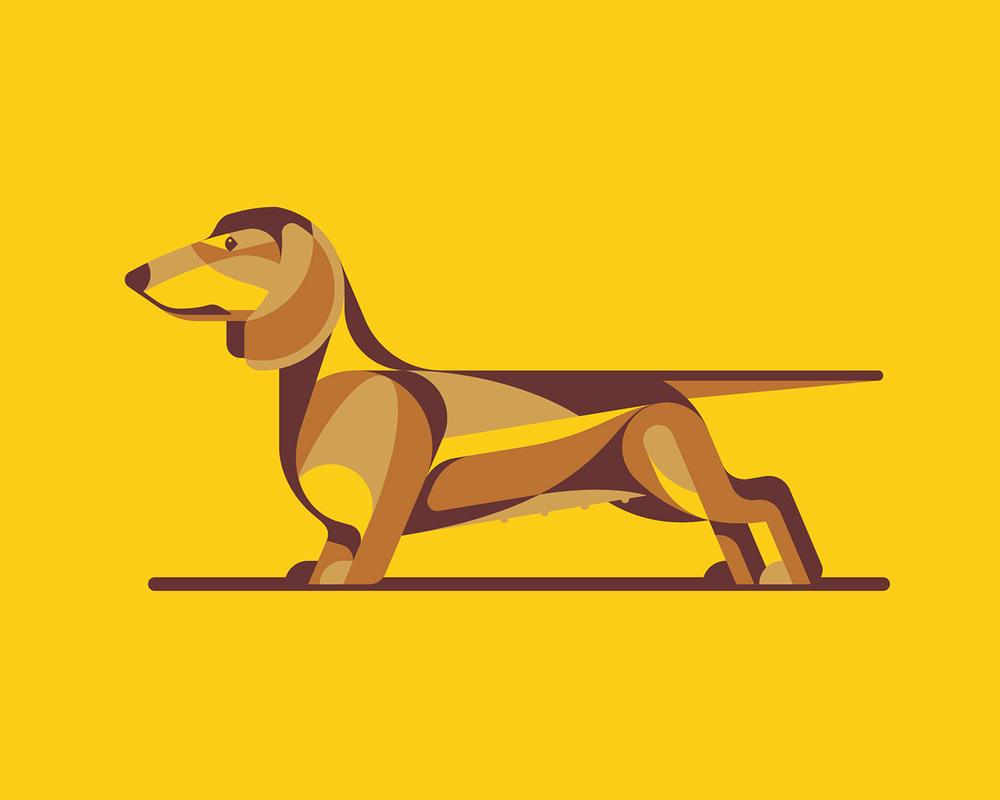 Dachshund Illustration by DKNG