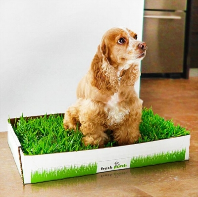 A dog using Fresh Patch in an appartment.