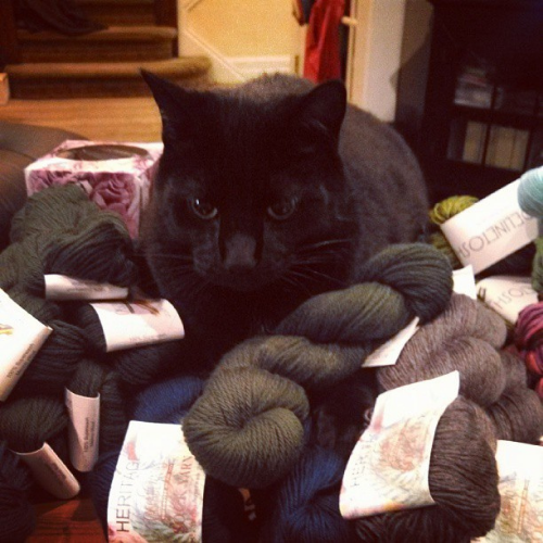 Henry loves him some wool.
