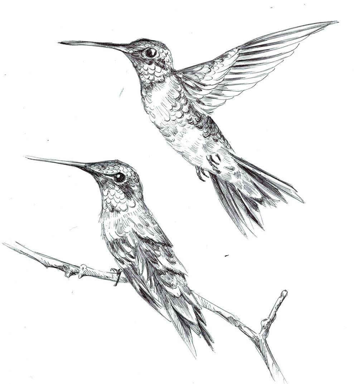 Ruby-Throated Hummingbirds, ballpoint pen