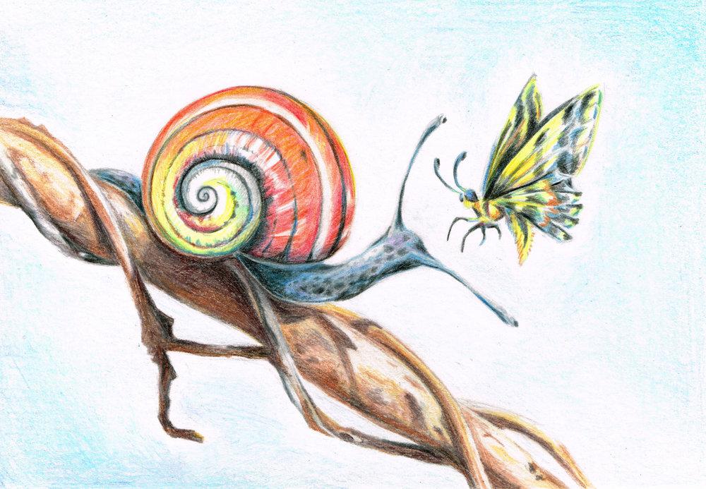 Cuban Land Snail, Colored Pencil