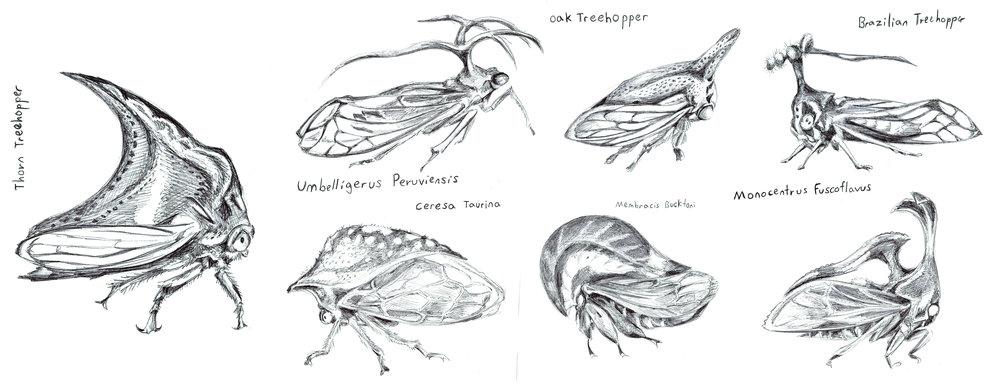 Various Treehopper species, Ballpoint Pen