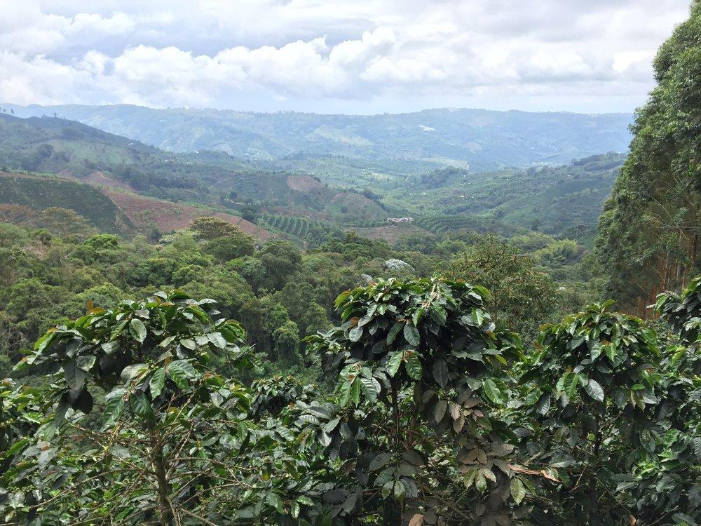 *Hi altitude coffee landscape 2.JPG
