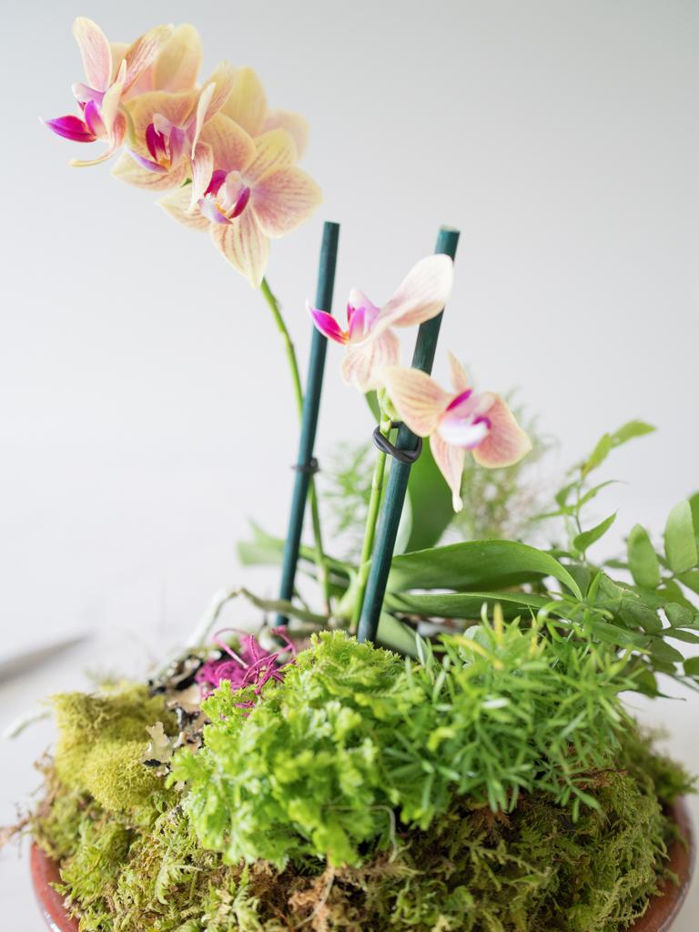 Diy Orchid Woodland Terrarium Pinch Paper Co