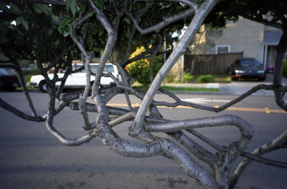 Tree-17.17.2012.jpg