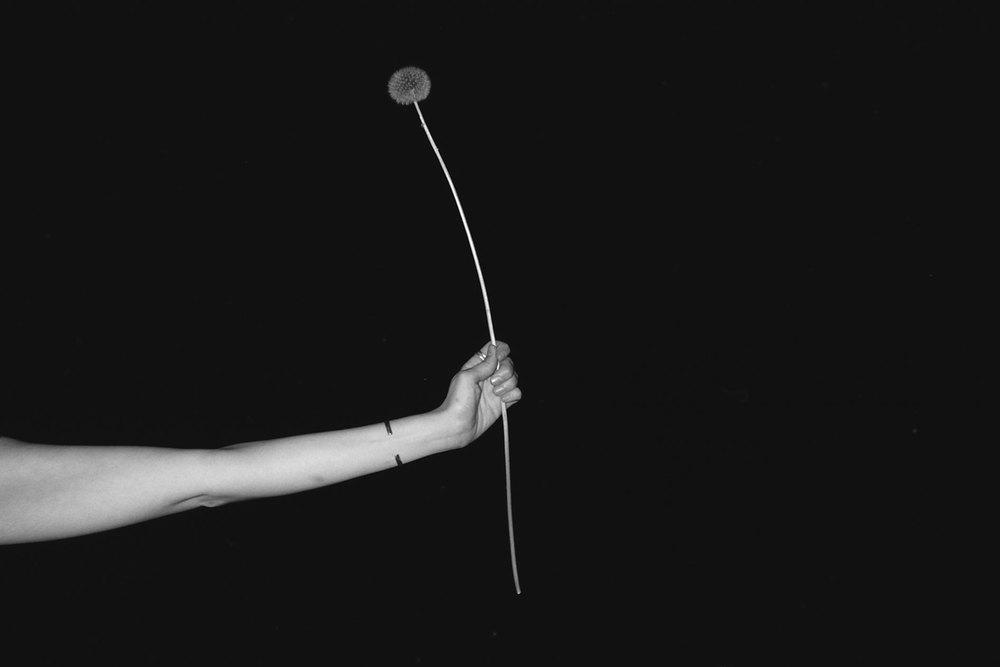 DandelionAtNightCROPPED-.35.2014.jpg