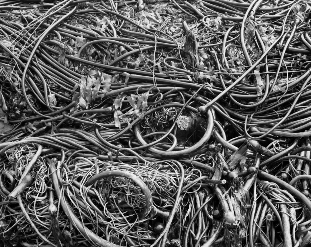 SeaweedRESIZED-8.53.2008.jpg