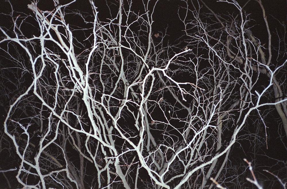 TreeAtNight-22.1.2015.jpg