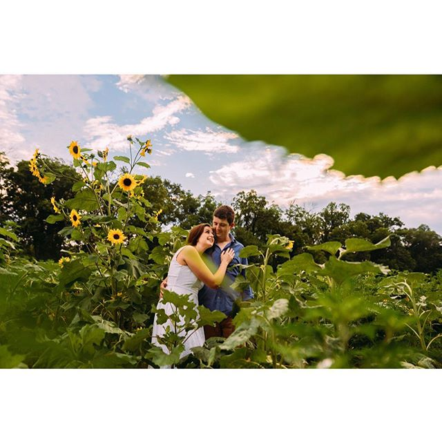 This is absolutely one of my favorite shots of 2018 #engagementphotos . • • • #dcphotographer #best #justengaged #love #instagood #model #cute #washingtondc #photooftheday #instamood #nikon #picoftheday #igers #girl #beautiful #weddings #sunflower #weddingphotography #nikon #dcweddingphotographer #red #bestoftheday #happy #picstitch #marylandphotographer #jj #photography #love #art
