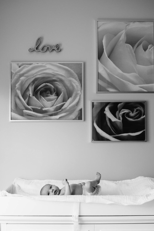Newborn Photographer Ligonier PA.jpg