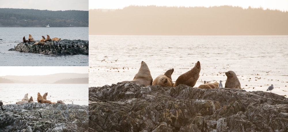 seals anacortes washington mariah fisher travel photography.jpg