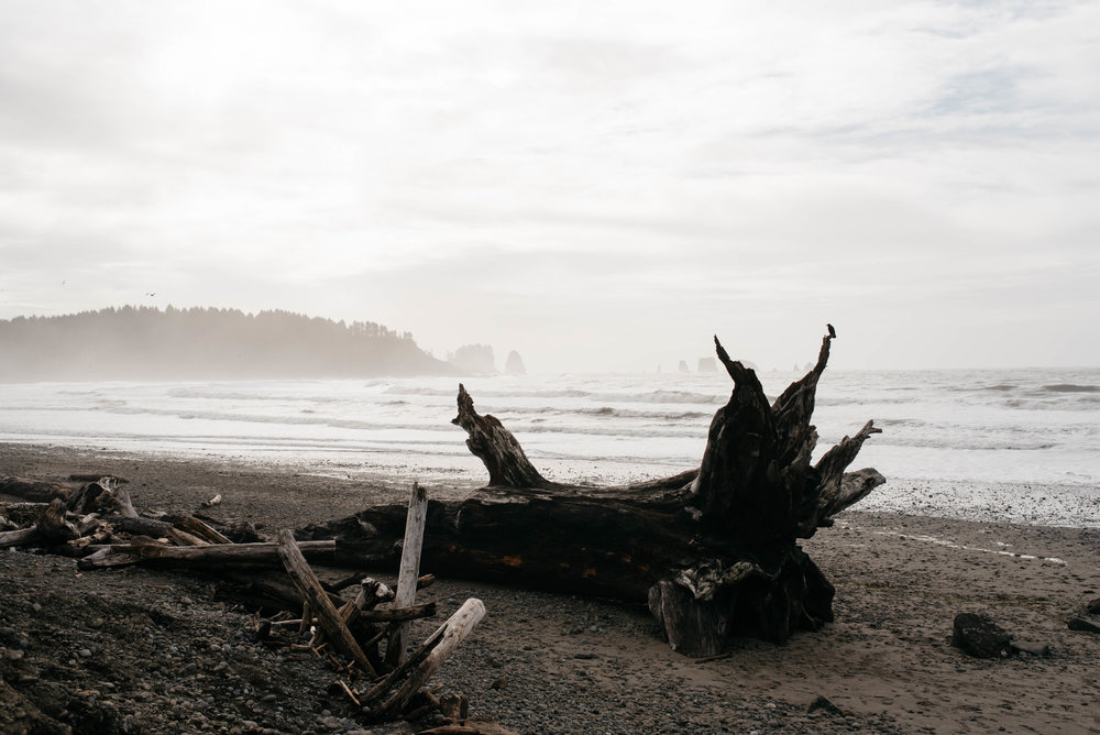Olympic National Park First Beach Travel photography-1003.jpg
