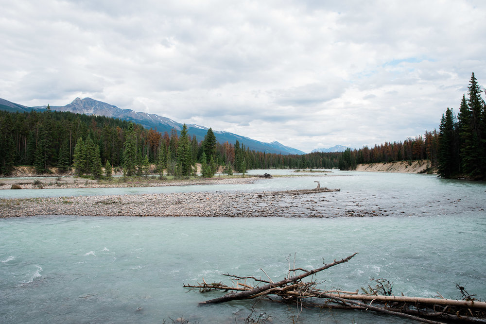 Athabasca River, Jasper National Park, Canada, Mariah Fisher Photography-2197.jpg