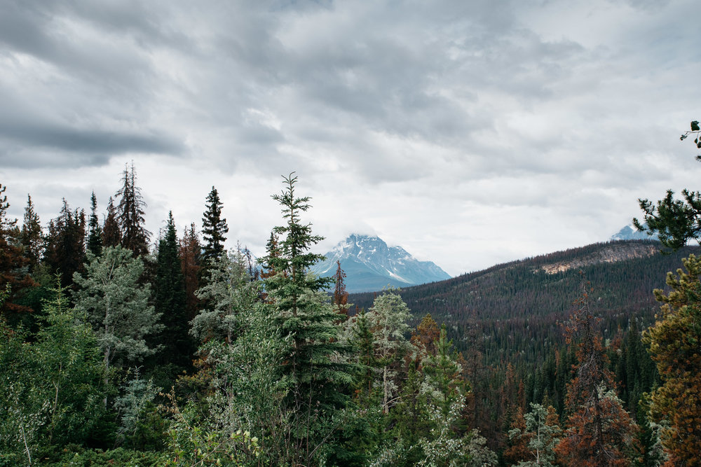 Jasper National Park, Canada, Mariah Fisher Photography-2357.jpg