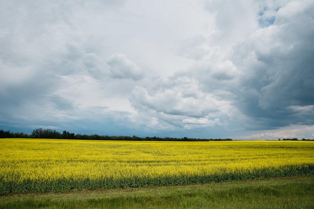 Edmonton, Alberta Canada, Mariah Fisher Photography-2911.jpg
