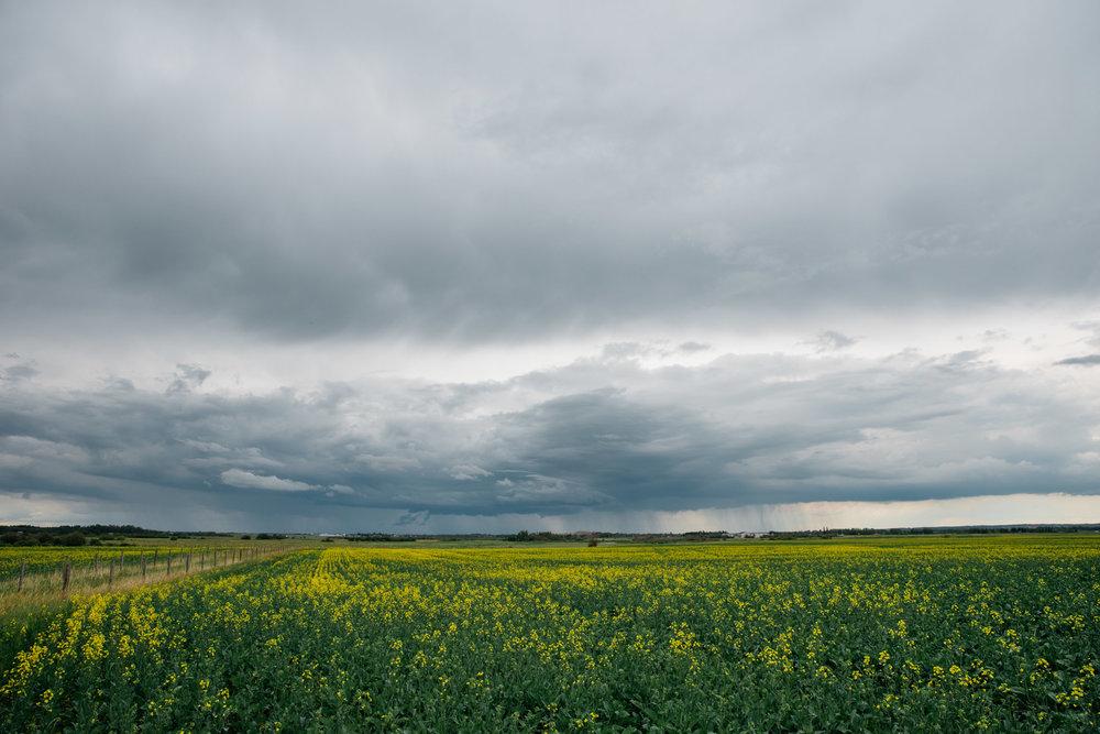 Edmonton, Alberta Canada, Mariah Fisher Photography-2920.jpg