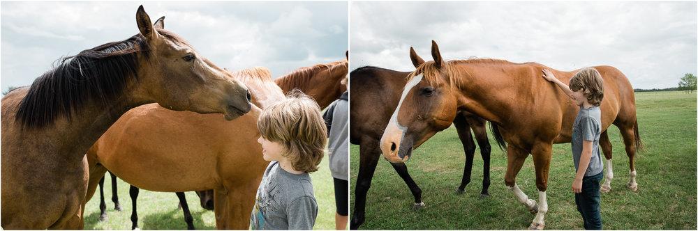 Henry horses, Edmonton Alberta.jpg