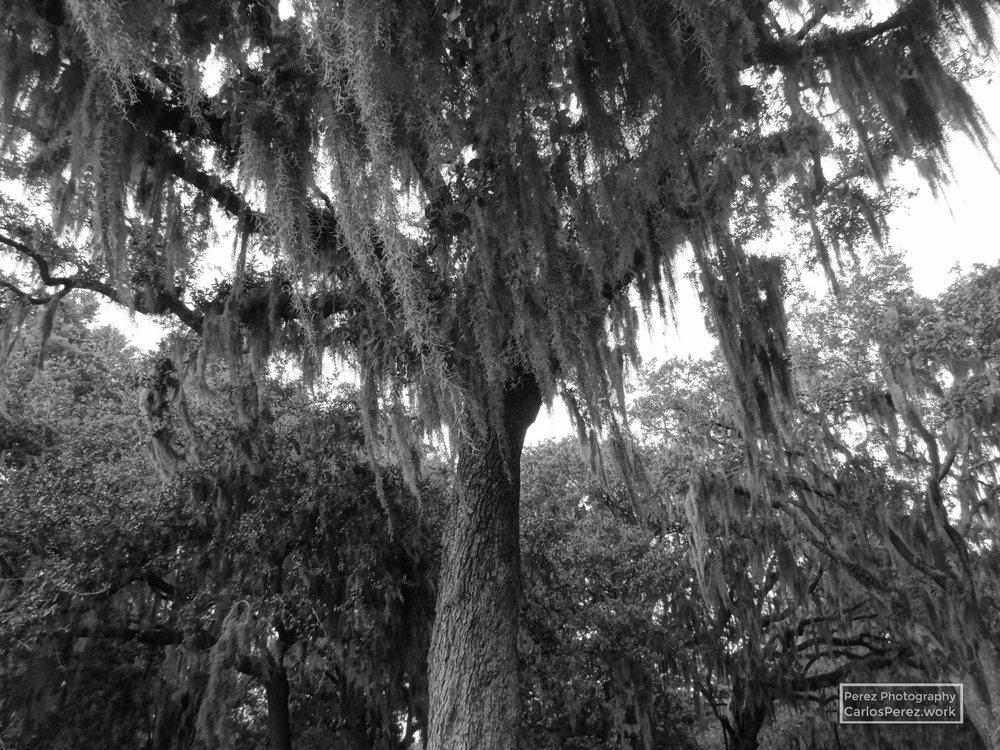 Savannah.jpg