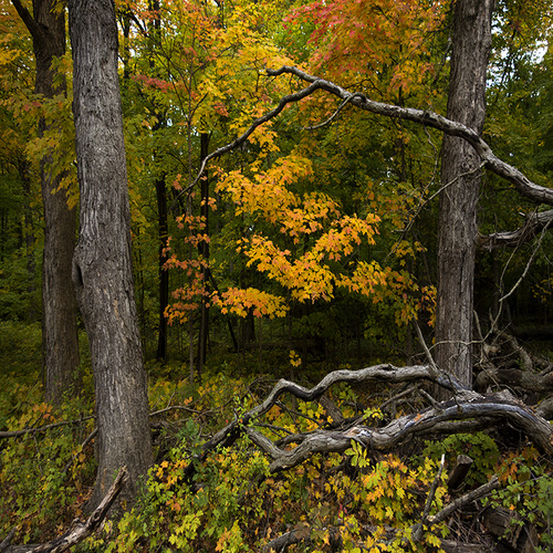 """autumn still life with branches - ryerson woods"" by Michael C. Czerepak"