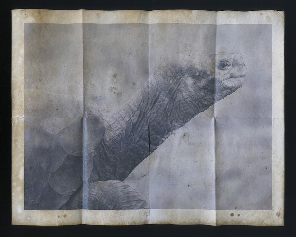 Chelonoidis nigra abingdonii (memento mori) by Christopher Reiger