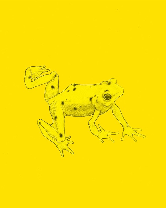 Artist Jenny Kendler's print of a Panamanian golden frog available at Endangered Species Print Project