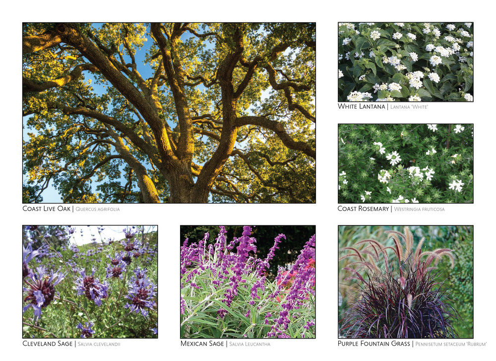 California Friendly Garden-01.jpg