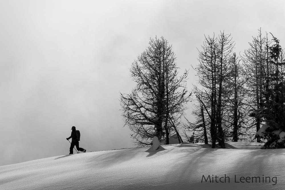 Winter Jumbo-2.jpg