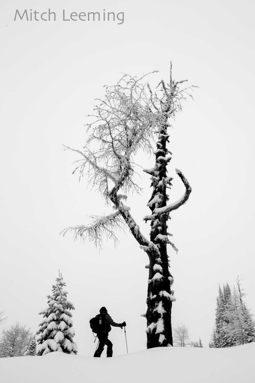 Winter Jumbo-11.jpg