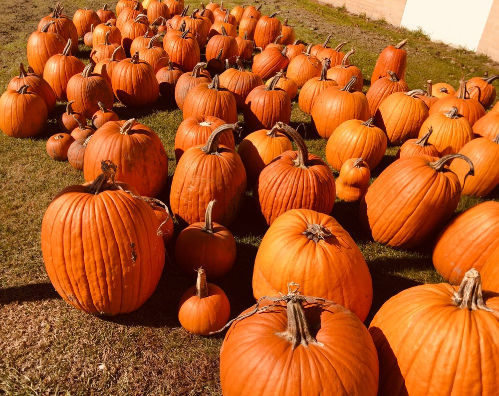 """Thank you"" to Fideler Badger Valley Farms for donating pumpkins for each of our i4L students! Haven't grabbed yours yet, be sure to grab it at the Halloween Bash on 10/26!"