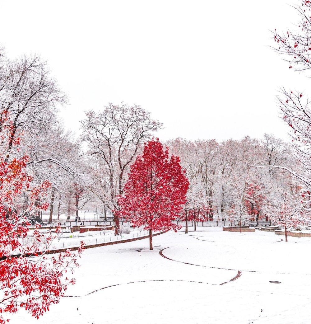Winter 2019 .jpeg