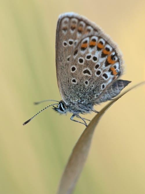 spring+butterfly.jpg