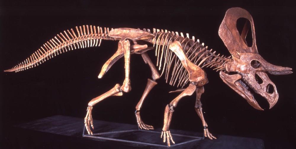 Gohier Ztops Skeletal Mount Cropped 5 2002.jpg