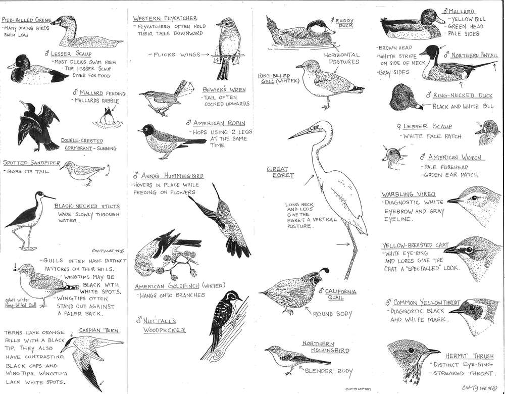 Lee-Bird-Guide1_Page_2.jpg