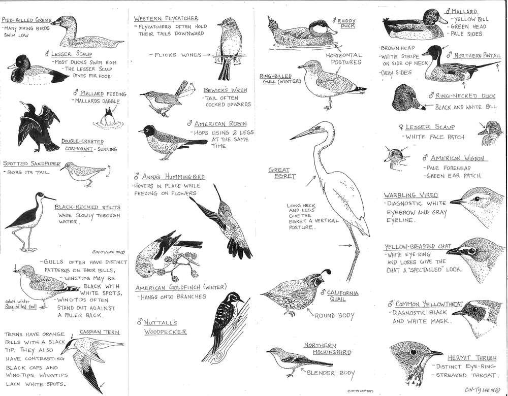 Lee-Bird-Guide1_Page_2.jpg