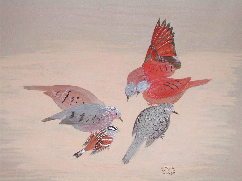 GroundDoves.jpg