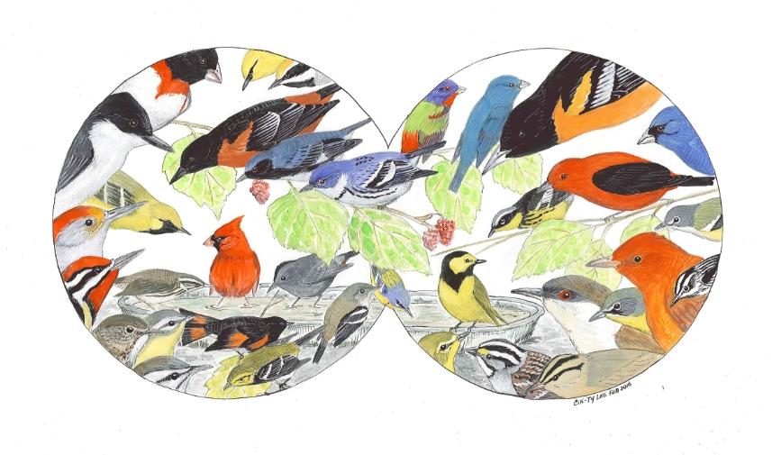 Birds through binoculars