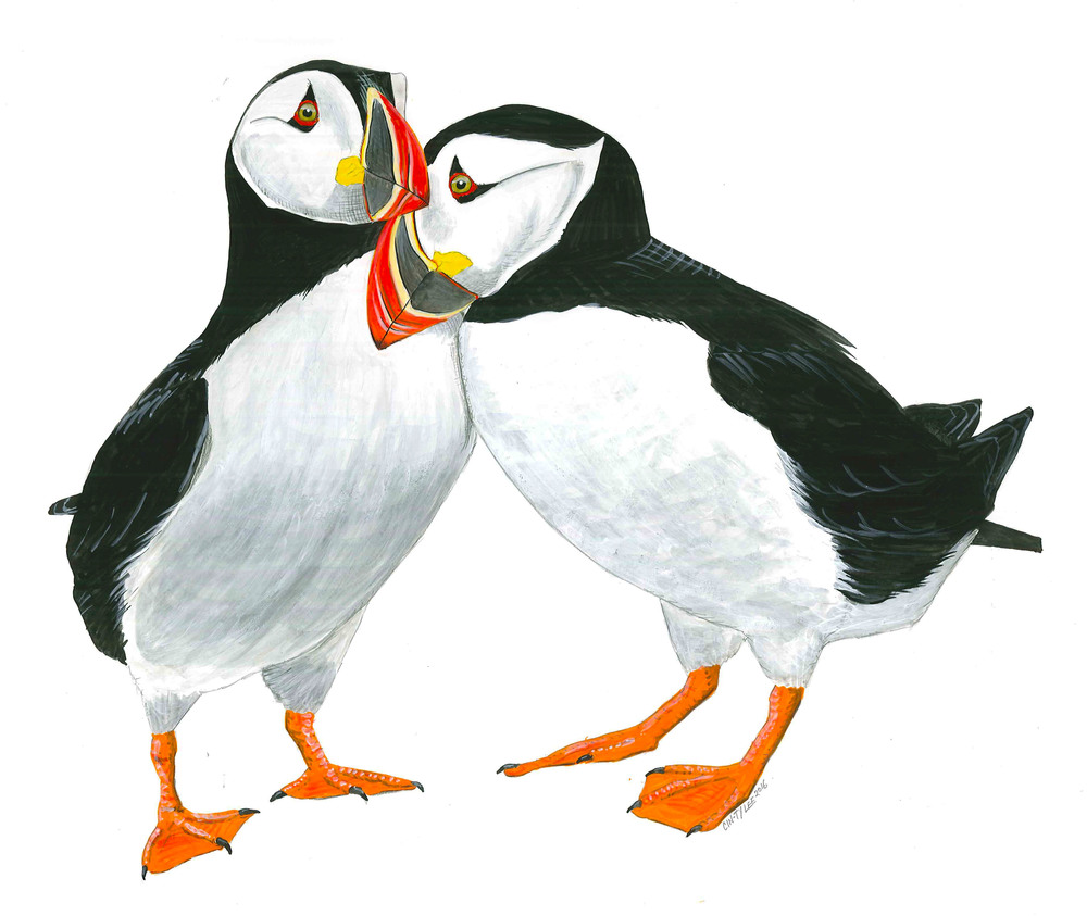 Atlantic Puffin Pair