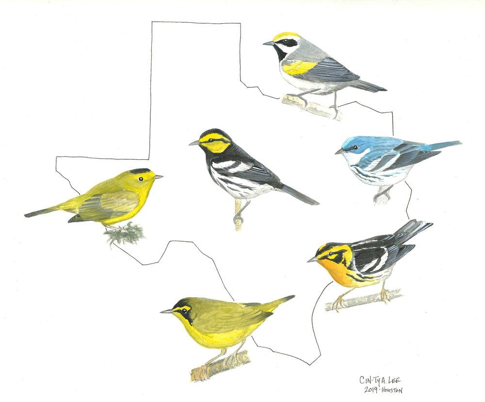 Texas warblers