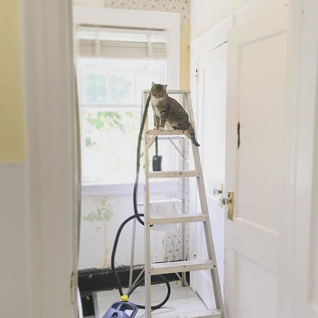 My wallpaper removal companion. #wallpaper #catonladder #catseverywhere #wallpaperremoval