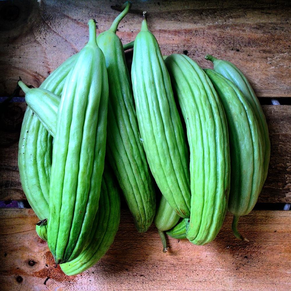 Italian Cucumbers